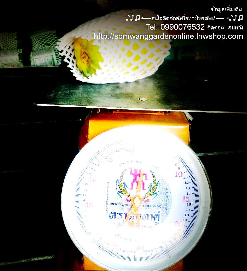 ราคามะละกอฮอลแลนด์ ตลาดไทย