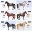 Mr.Z 1/6 MRZ028 001 - 006 Animal model - Ili Horses thumbnail 1