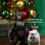 Mr.Z MRZ023 1/6 Chimpanzee and Bulldog Statues thumbnail 9