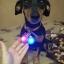 ปลอกคอสุนัขเรืองแสง thumbnail 26